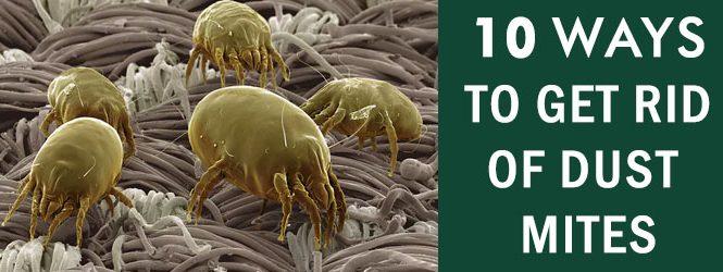 Get Rid Dust Mites Melbourne