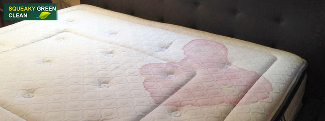 Get Rid Of Blood Stains From The Mattress Squeaky Green Clean