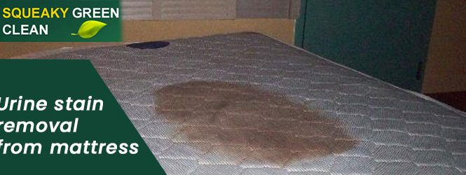 Urine Stain Removal From Mattress